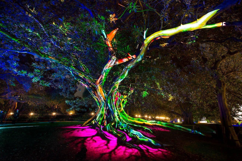 Vivid Sydney Royal Botanic Gardens Light Art Installation Installation Art Light Art