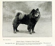 Chow Chow Wikipedia The Free Encyclopedia Black Dogs Breeds Dogs