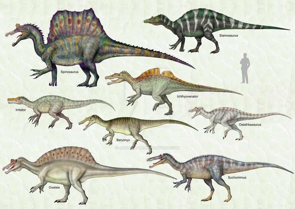 Spinosauridae+by+cisiopurple.deviantart.com+on+@DeviantArt ...