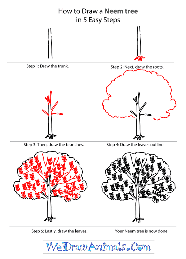 How To Draw A Neem Tree Neem Tree Essay Drawings