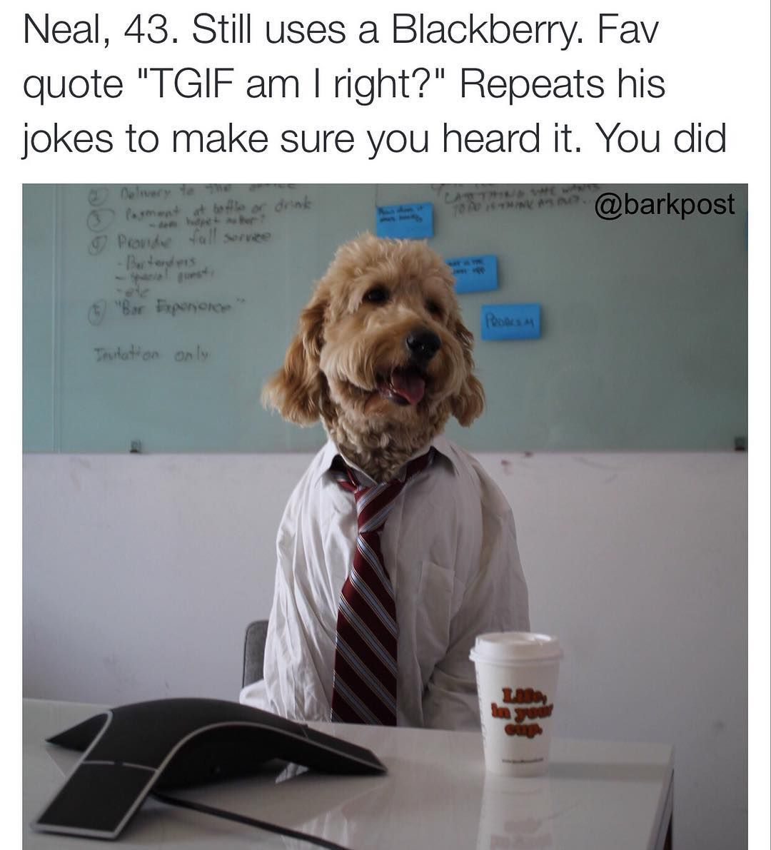 Barkpostyou know this guy neal nelsonthegoldendoodle dogbios