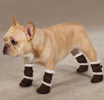Ugg dogs for boots best photo