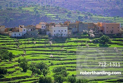 Terraced landscape, Taroudant, Morocco, North Africa