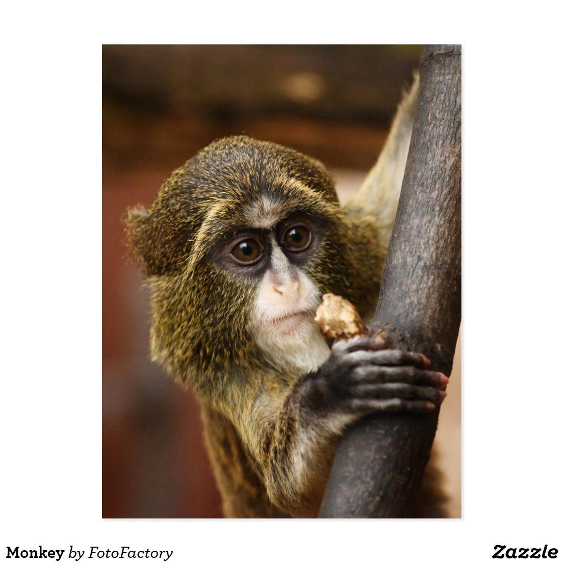 Monkey Postcard Zazzle Com Animals Africa Animals Cute Monkey