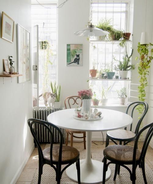 prateleiras janela para decorar com itens de vidro, as plantas da casa e de mesa