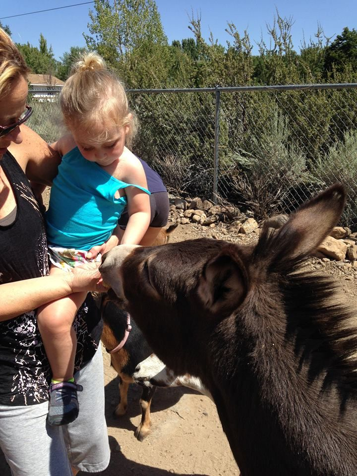 Reno Rosie the Miniature Donkey visits with her young friend.