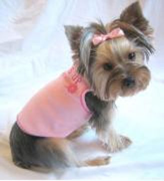 short haired yorkies | Cute Short Yorkie Haircuts - Website of xufeknox!