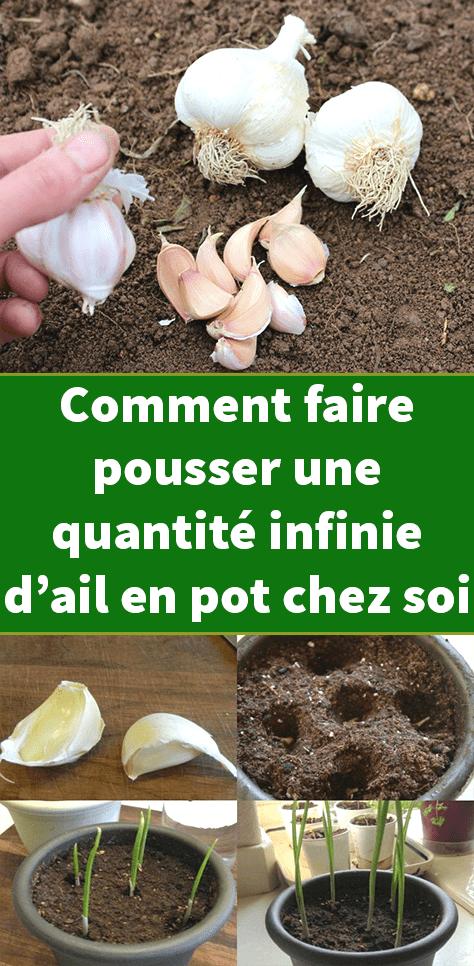 Comment faire pousser une quantité infinie d'ail en pot