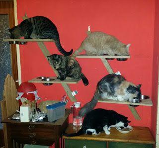 Sternschnuppes Tierwelt DIY Futterplatz für Katzen