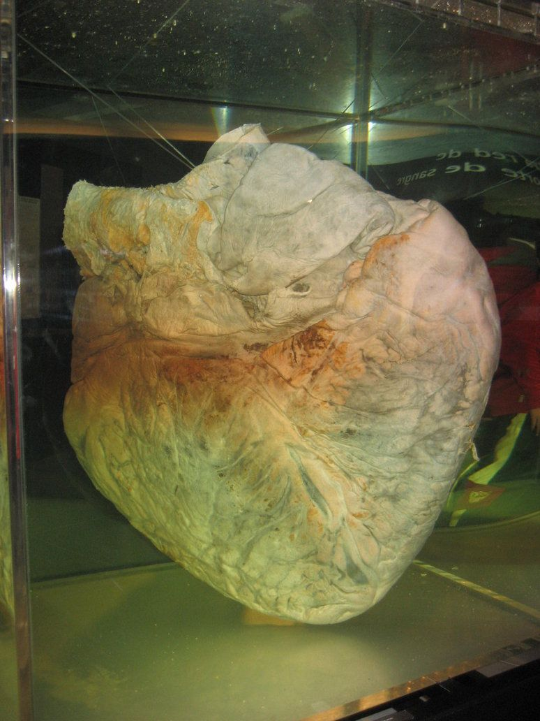 صور قلب الحوت الأزرق صور و فيديو العلوم سبيلنا Vegetables
