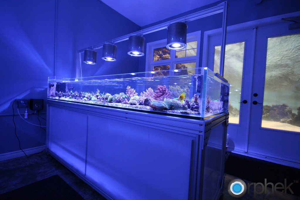 Pin by benji inniger on cool fish tanks pinterest for Saltwater fish tank lights