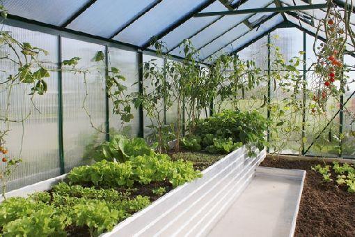 gardenplaza obst und gem se in hochbeeten und hochbeet gew chsh usern anbauen eigene. Black Bedroom Furniture Sets. Home Design Ideas