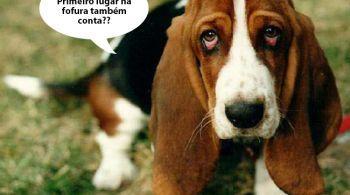 10 Raças de cachorros mais fedidos