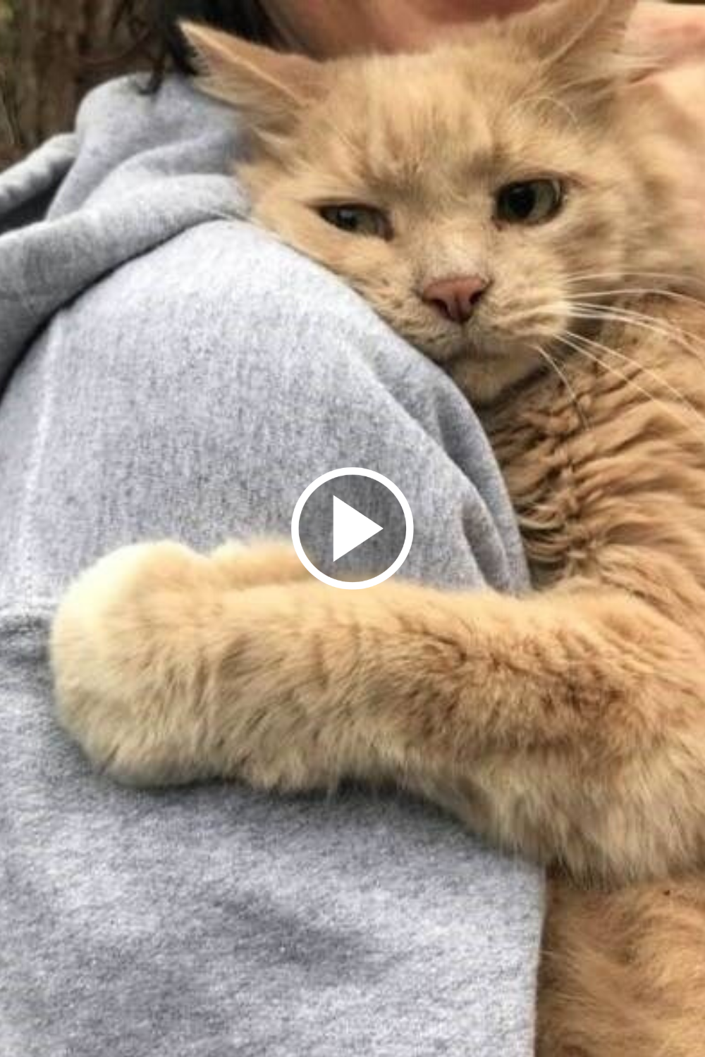 Tiktok Pets Funny And Cute Pets Compilation In 2020 Funny Cat Memes Pets Cute Animals