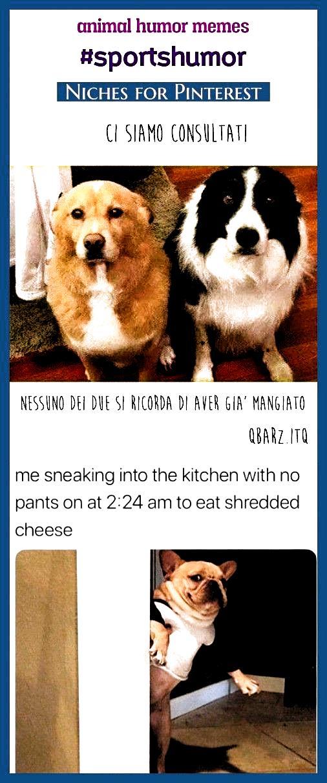 Animal humor memes . animal humor laughing so hard, animal humor dog, animal humor hilarious