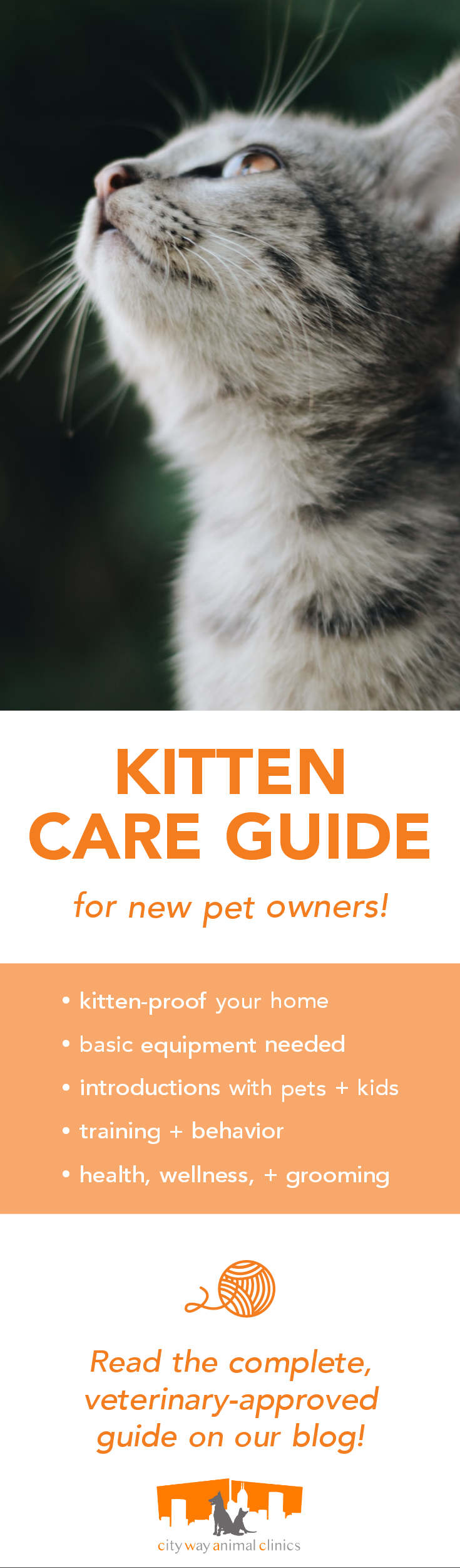 Vet Approved Kitten Care Guide In 2020 Pet Clinic Kitten Care Kitten