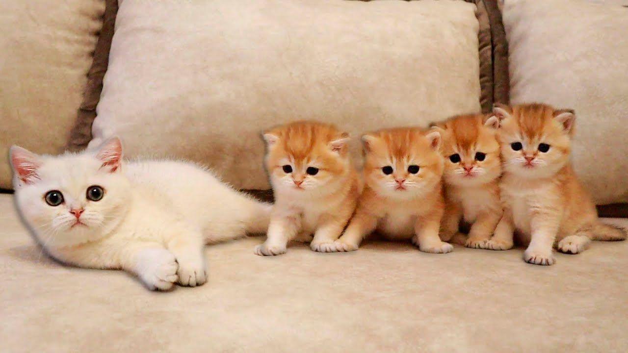 Kitten Coco Met Her Four Brothers Youtube In 2020 Kittens Cutest Cute Kitten Gif Cute Cat Gif