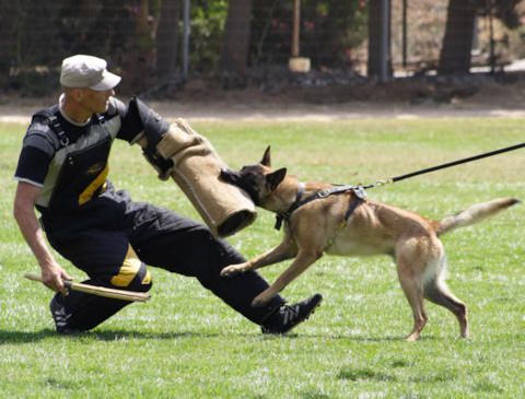 Http Www Schutzhund Dog Training Equipment Store Com Images