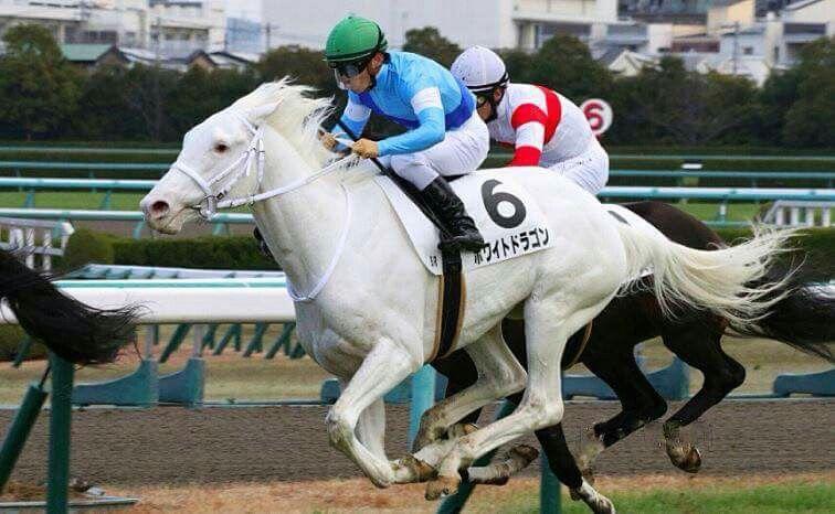 Pin By Nan Barber On White Thoroughbreds Horses Dragon Horse White Horses