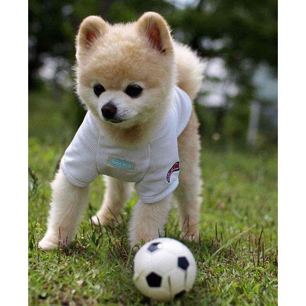 Download Pom Canine Adorable Dog - af03a60939c8c380166ddb1b9df7df78  Graphic_714013  .jpg