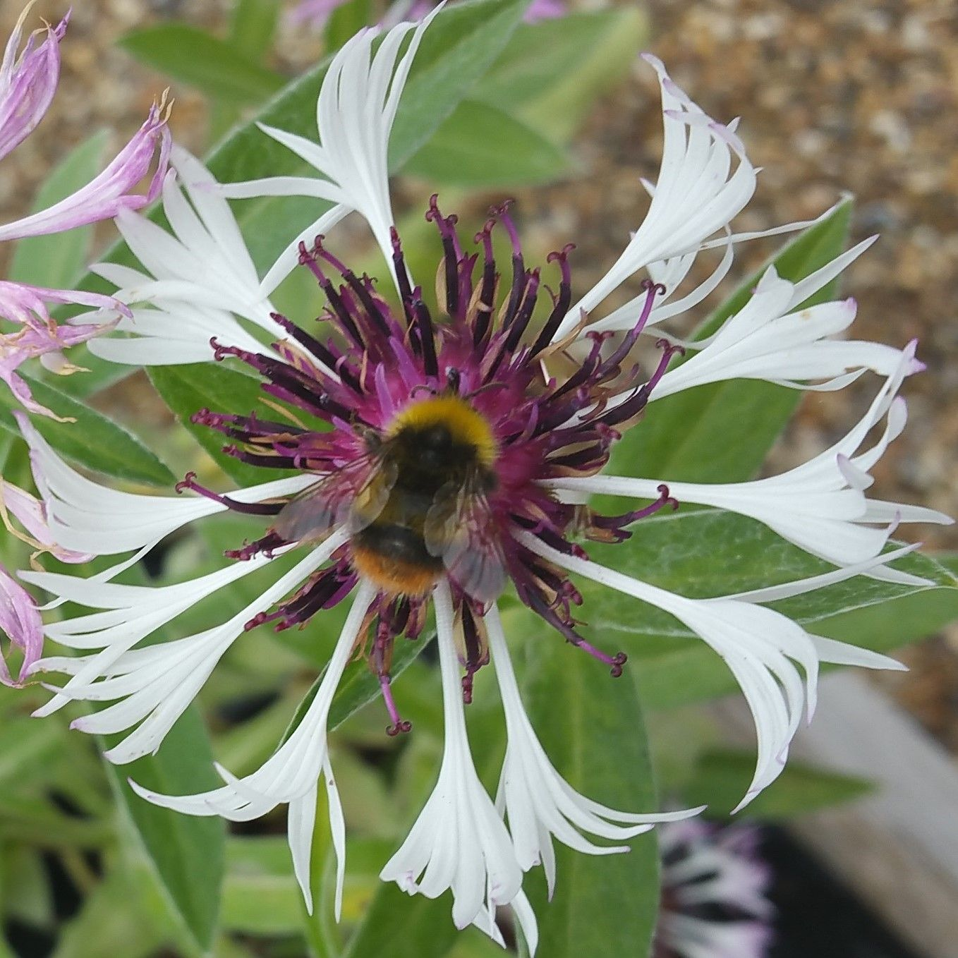 Stocking a wide range of garden plants throughout the year