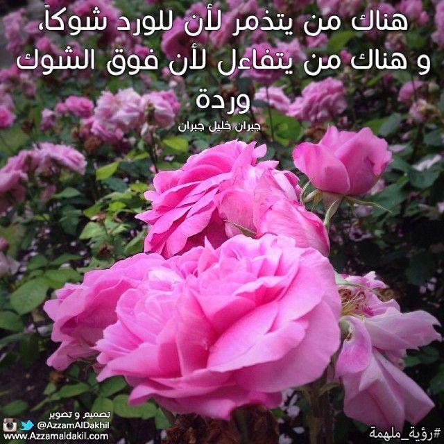 هناك من يتذمر لأن للورد شوكا وهناك من يتفاءل لأن فوق الشوك وردة جبران خليل جبران Qoutes Beauty Rose