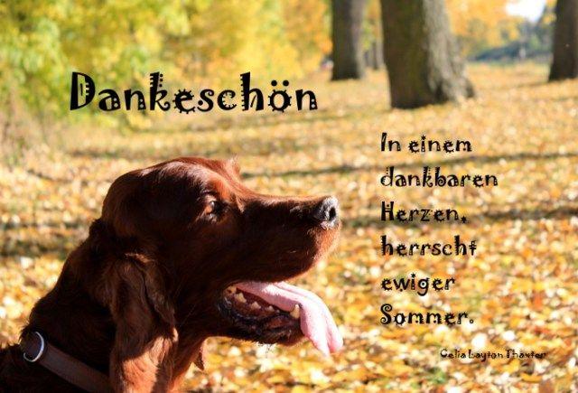 Spruchbild mit Hund #Danke #Sprüche