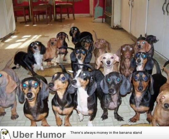 I Run A Dachshund Rescue I Open A Bag Of Treats And Turn Around