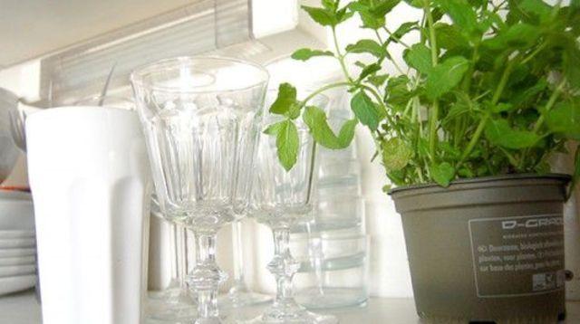 plante d 39 int rieur entretien facile pas ch re d polluantes tricot pinterest plante. Black Bedroom Furniture Sets. Home Design Ideas