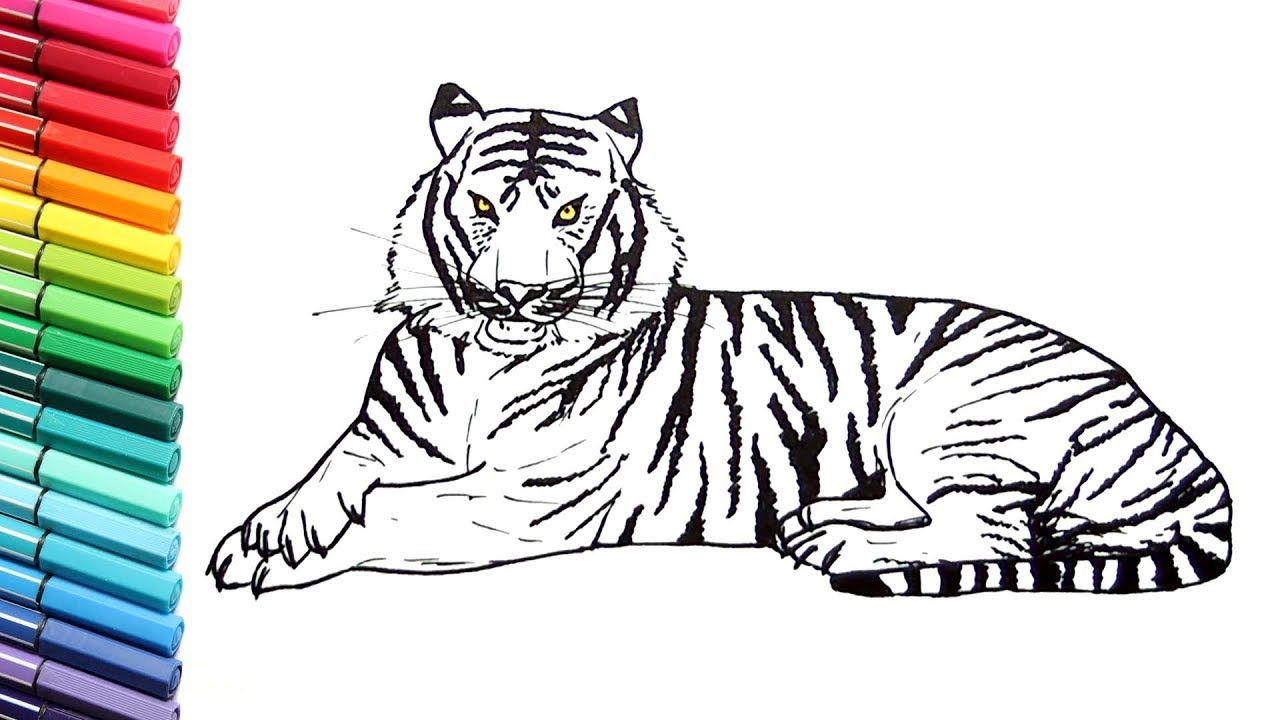 drawing and coloring a tiger how to draw animals color pages for ...