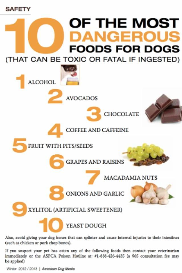 10 Poisonous Foods For Dogs This Should Be A Refrigerator Magnet