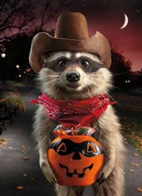 Image result for happy halloween animals
