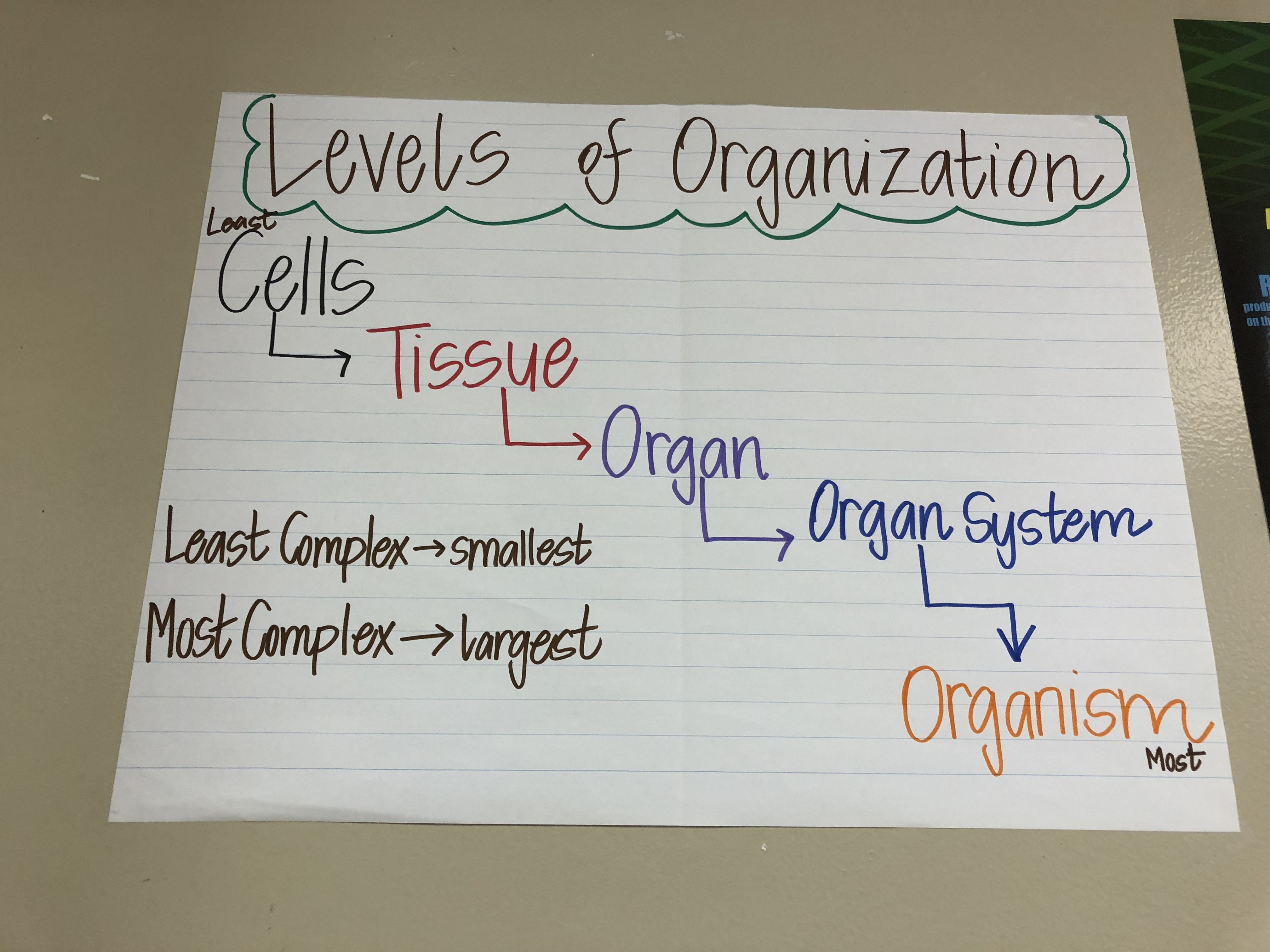 Levels Of Organization Anchor Chart Cell Theory Anchor Charts Teaching