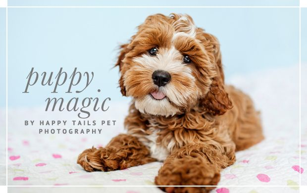 Pretty Fluffy The Ultimate Lifestyle Blog For The Modern Pet Owner Featuring Celebrity Dogs Diy Pet Projects D Cockapoo Puppies Puppy Photography Cockapoo