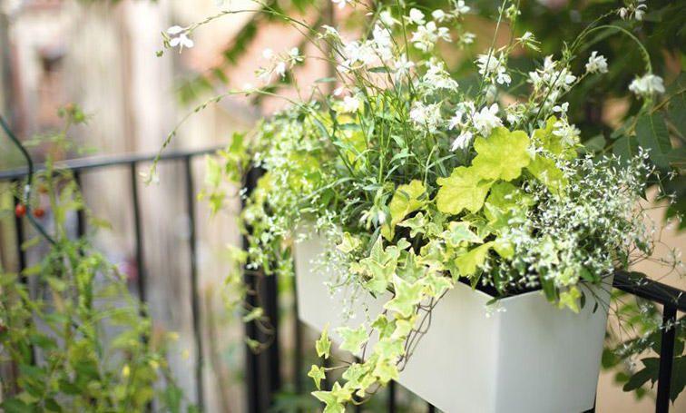 fleurir son balcon verveine p tunia ou g ranium. Black Bedroom Furniture Sets. Home Design Ideas