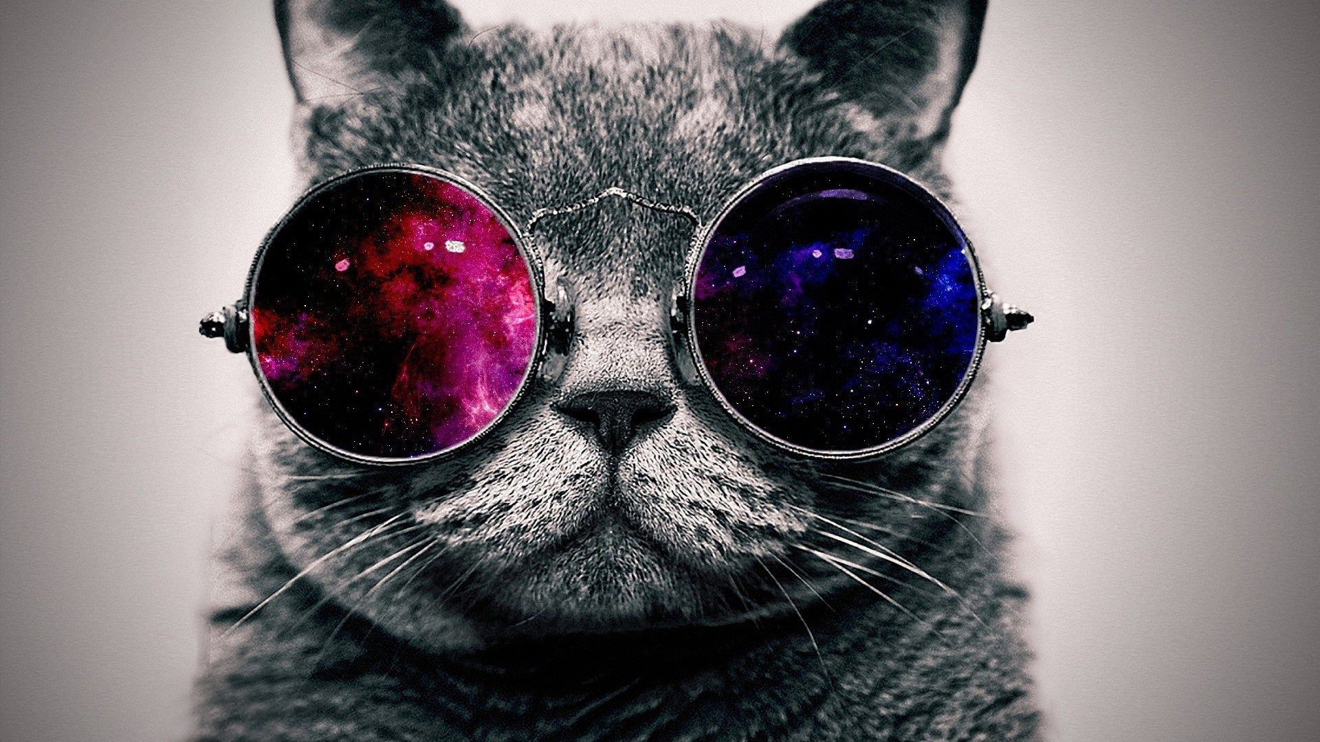 Cool cat with glasses background ololoshenka hipster - Cool backgrounds of cats ...