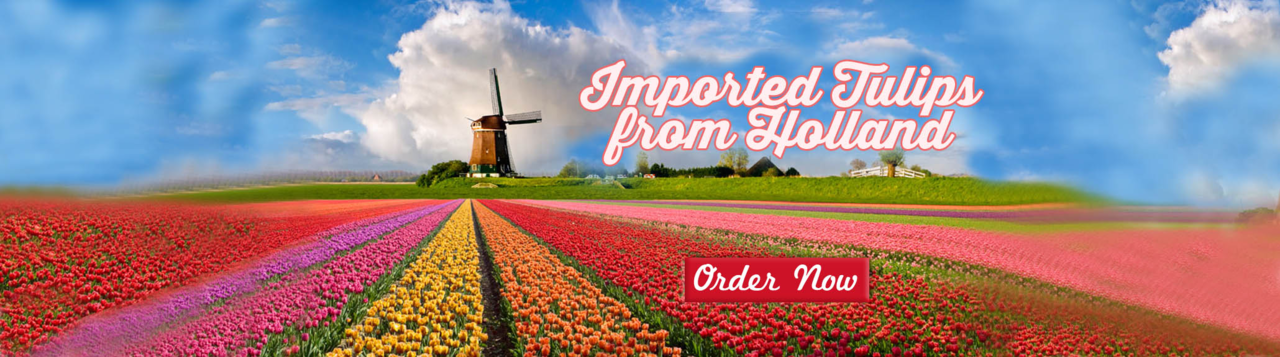 Flower Delivery Philippines Send Tulips Delivery In Manila Flower Delivery Tulips Delivery Online Flower Shop