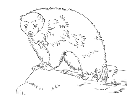 Cute Wolverine coloring page Animals Pinterest Printable