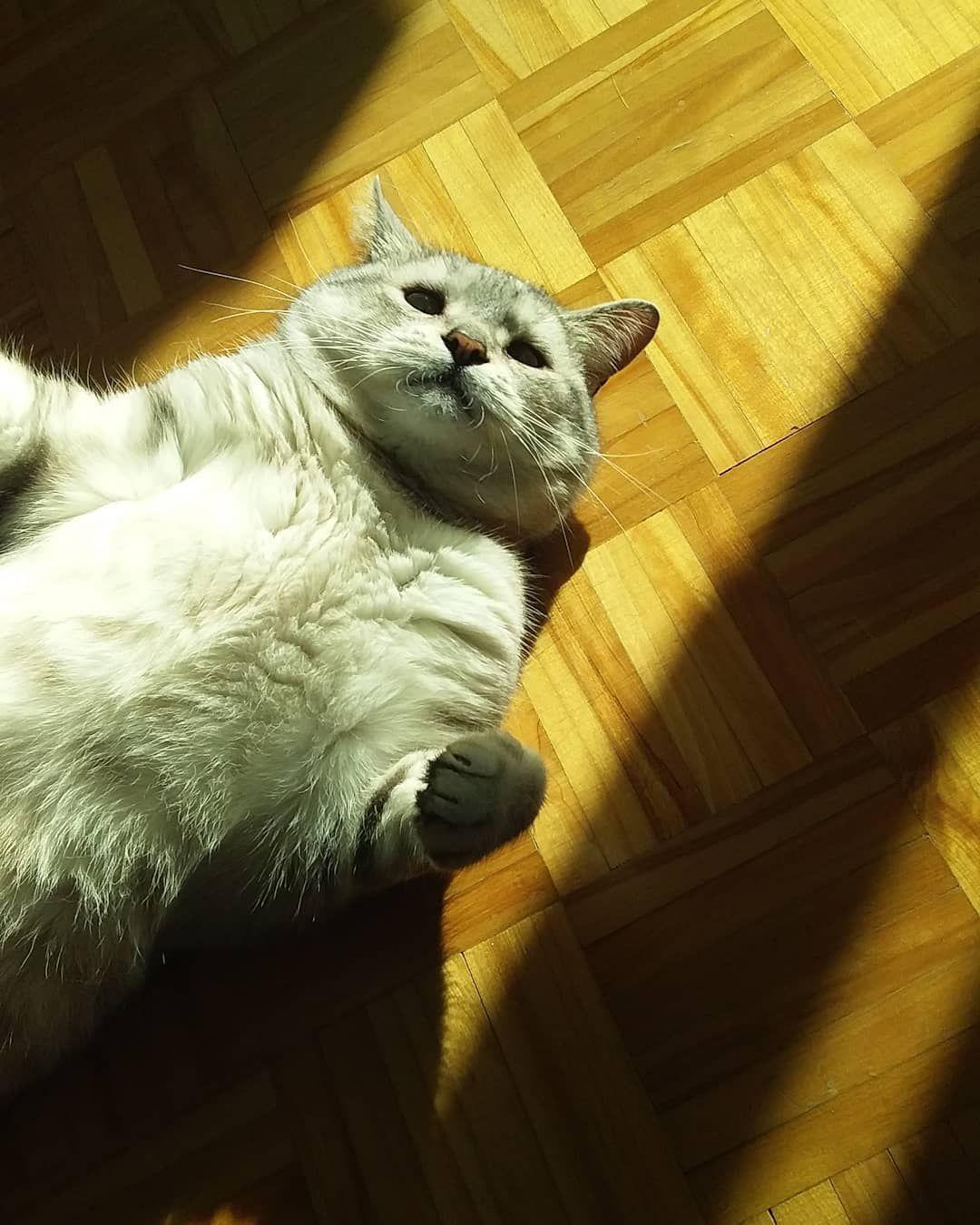 A sunny day • • • • • • • • #gatos #gatineos #gatitos #gatodeldia #catsarebeatifull #catsoftheday #mood #wildlife #cats_of_instagram #cats #catsfollowers #catsofig #cats🐱 #catsoftheworld #canada #catlife #catlovers #cats_of_instworld