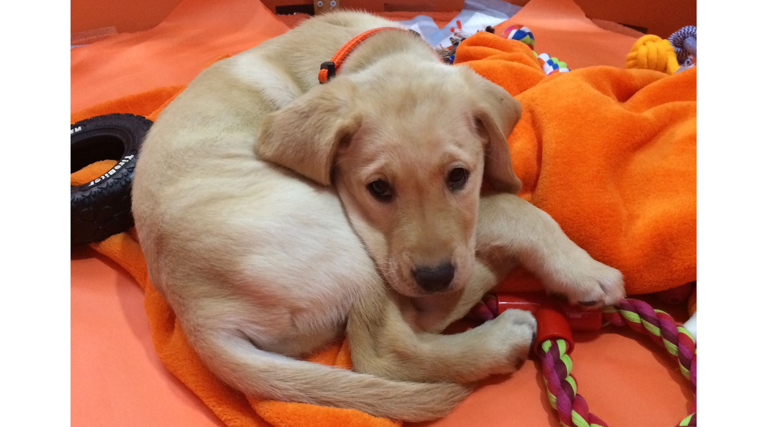 Wrangler's big (and adorable) morning Puppy cam, Puppy
