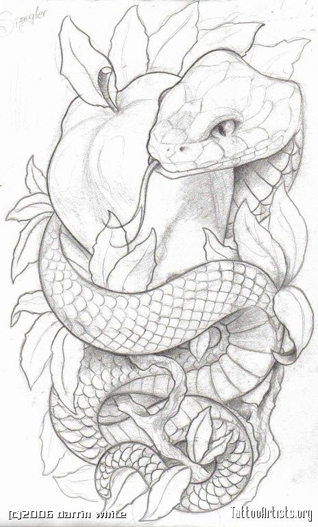 Nice Thats Art Dessin Serpent Tatouage De Pomme Idees Esquisses