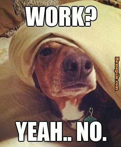 I Work From Home And My Golden Comes In My Office Everyday Around Noon To Remind Me That Its Time For A Lunch Break Funny Dog Memes Funny Animal Memes Funny