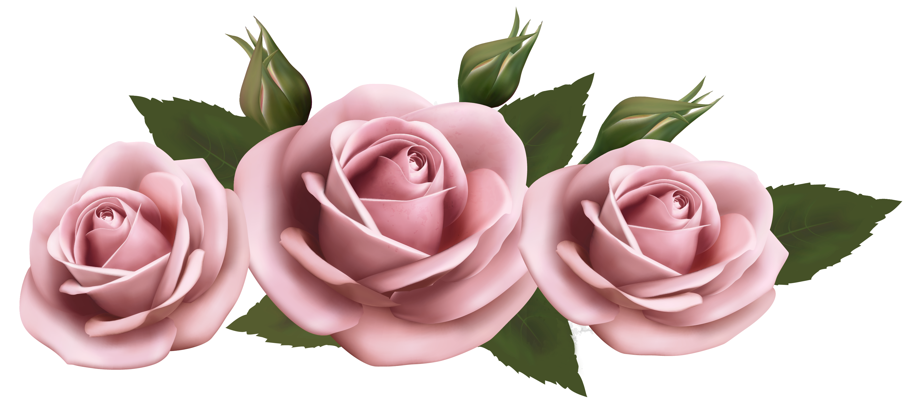 Beautiful_Transparent_Pink_Roses_PNG_Picture.png (3612