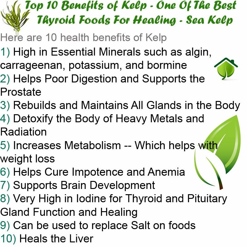 Kelp supplements top 10 benefits of kelp one of the for Cuisine for healing