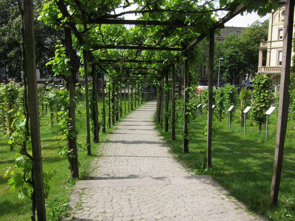 Vines At Colombi Palace Freiburg Im Breisgau Baden Wurttemberg Germany Wnimѕu ѕah U Freiburg Freiburg Im Breisgau Germany