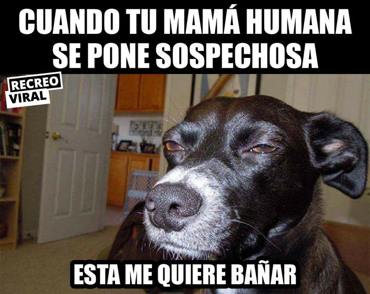 Tu Perro Y Su Sexto Sentido Memes Memes De Perros Chistosos Memes Divertidos
