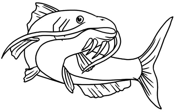 Fish Color Page For Kindergarten Fish Coloring Page Animal Coloring Pages Coloring Pictures