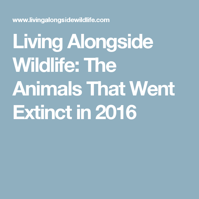 living alongside wildlife the animals that went extinct in 2016