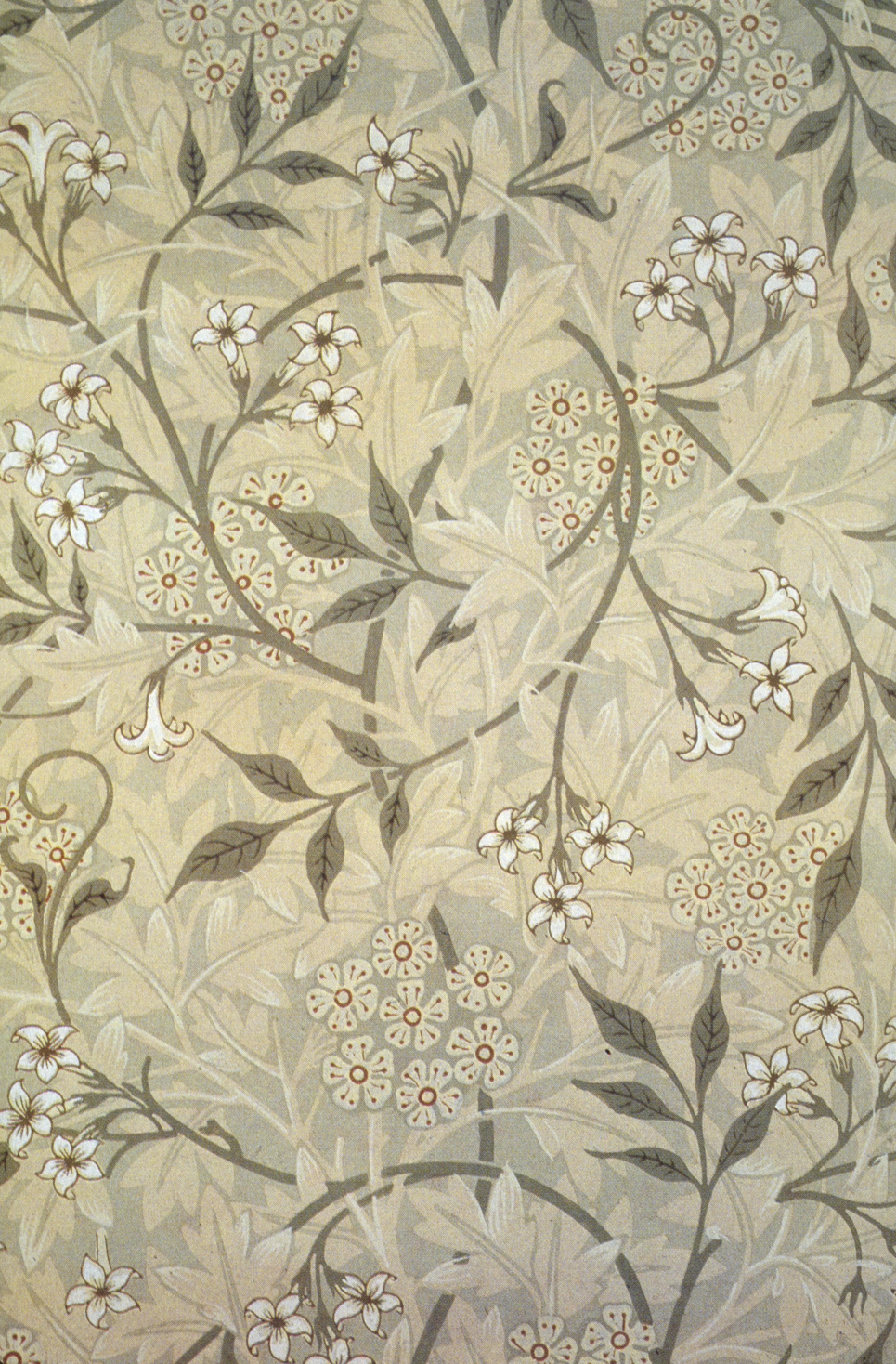 Jasmine William morris, Jasmine and Wallpaper
