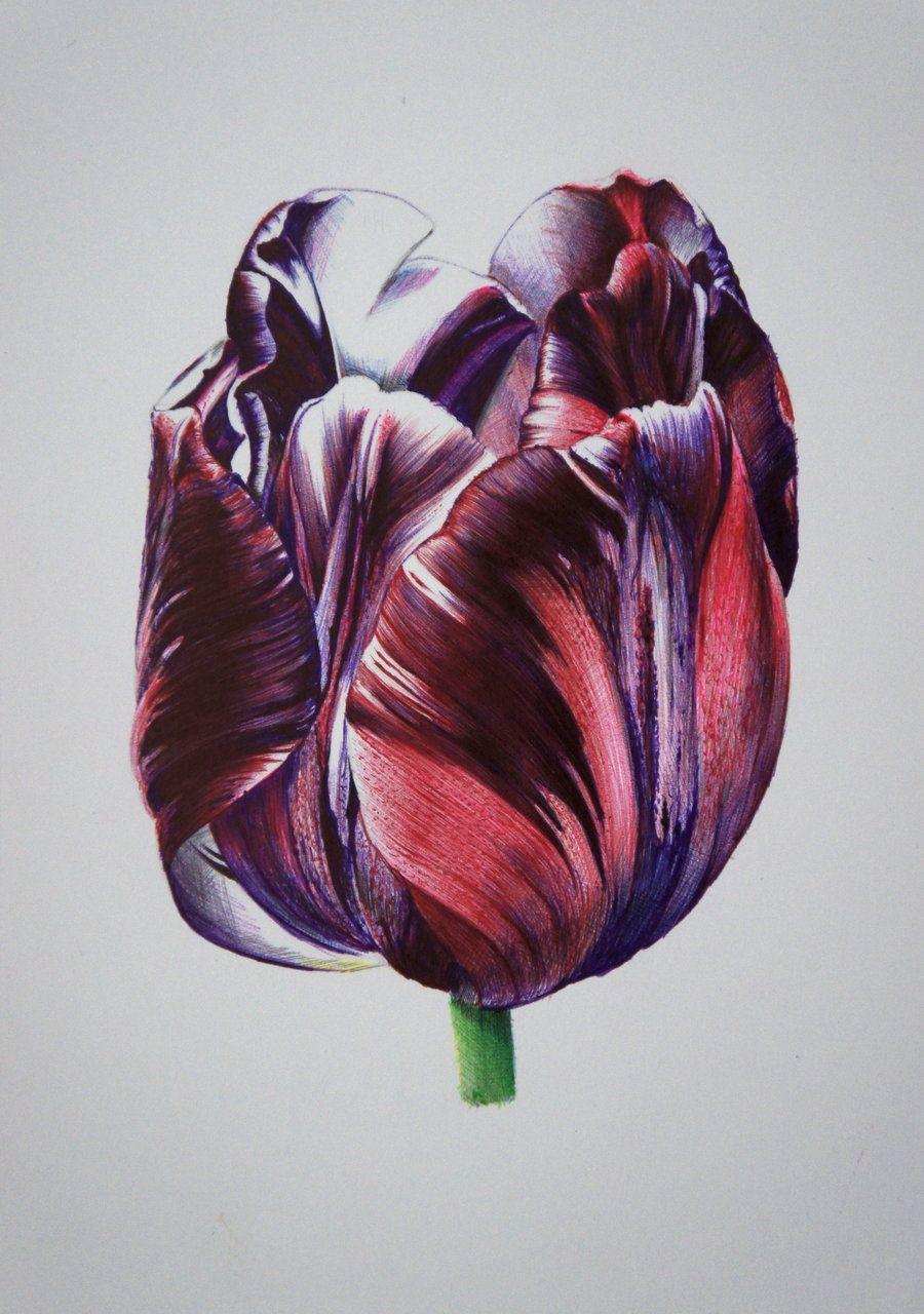 Tulip bic pens by reviantart on deviantart power of